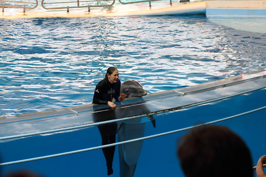 Inner Photograph - Dolphin Show - National Aquarium In Baltimore Md - 1212229 by DC Photographer