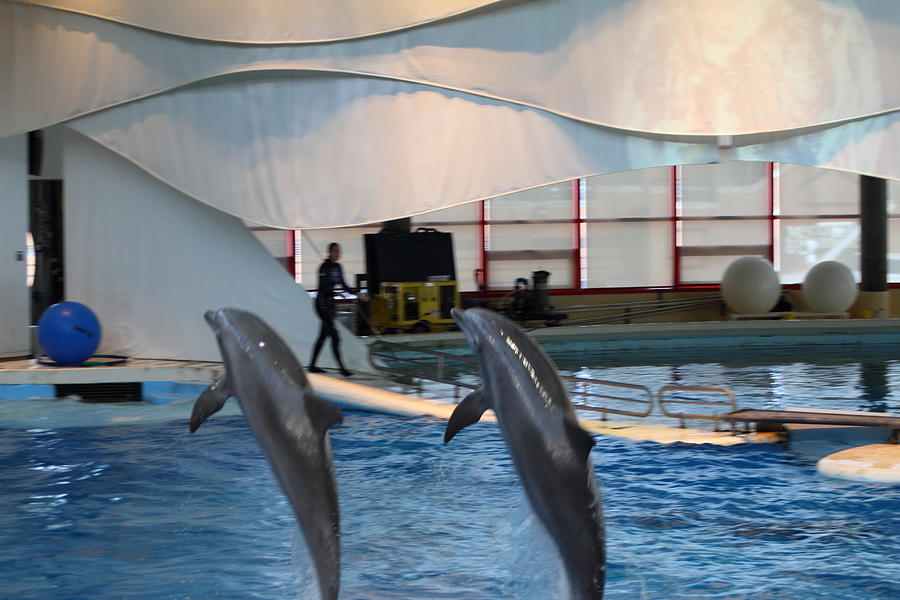 Dolphin Show - National Aquarium In Baltimore Md - 1212255 ...