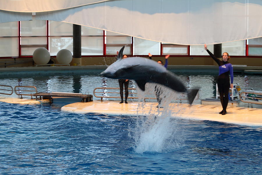 Dolphin Show - National Aquarium In Baltimore Md - 1212271 ...