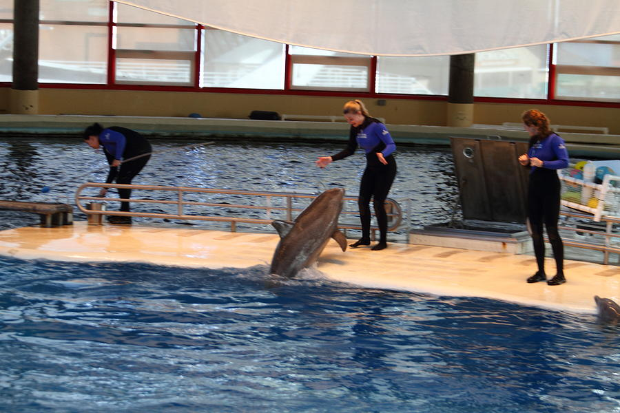 Inner Photograph - Dolphin Show - National Aquarium In Baltimore Md - 121231 by DC Photographer