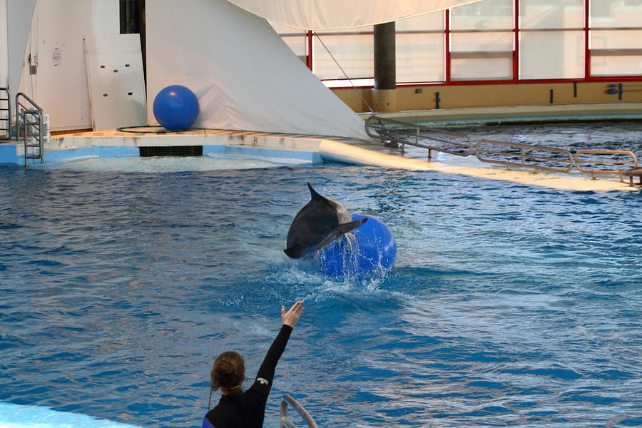 Inner Photograph - Dolphin Show - National Aquarium In Baltimore Md - 121241 by DC Photographer
