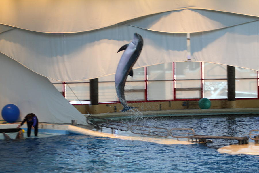 Inner Photograph - Dolphin Show - National Aquarium In Baltimore Md - 121254 by DC Photographer
