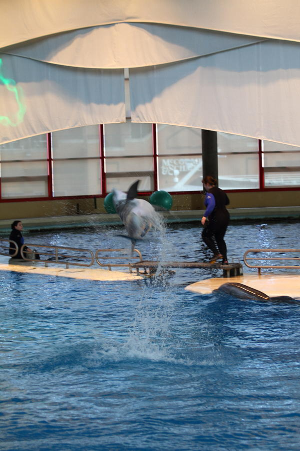 Inner Photograph - Dolphin Show - National Aquarium In Baltimore Md - 121267 by DC Photographer