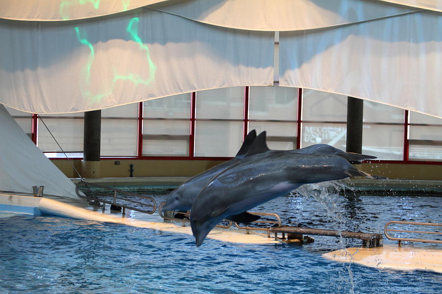 Dolphin Show National Aquarium In Baltimore Md 121284 Photograph By Dc Photographer
