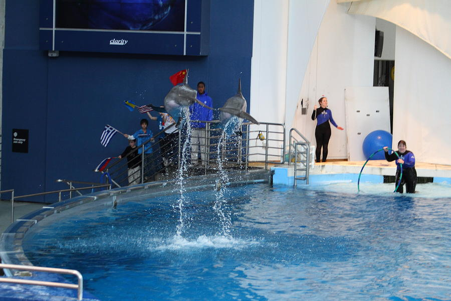 Dolphin Show National Aquarium In Baltimore Md 121289 Photograph By Dc Photographer