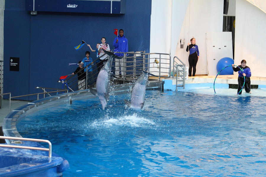 Inner Photograph - Dolphin Show - National Aquarium In Baltimore Md - 121291 by DC Photographer