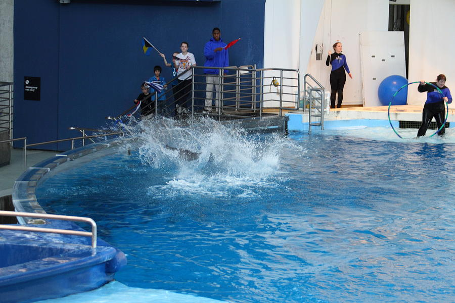 Inner Photograph - Dolphin Show - National Aquarium In Baltimore Md - 121293 by DC Photographer