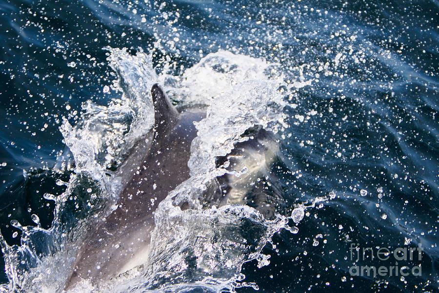 Dolphin Splash by John Wadleigh