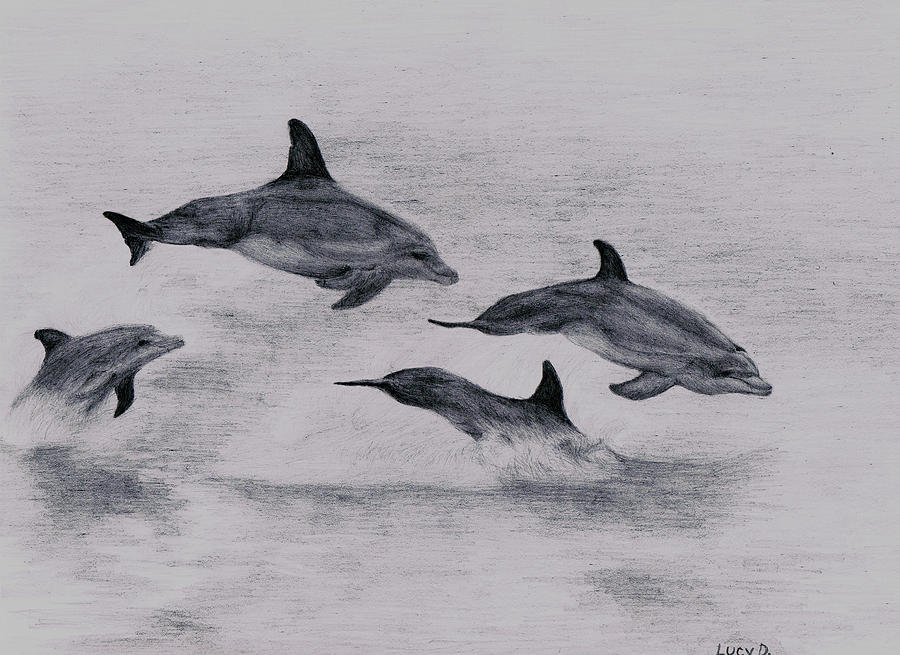 Dolphin Drawing - Dolphins by Lucy D