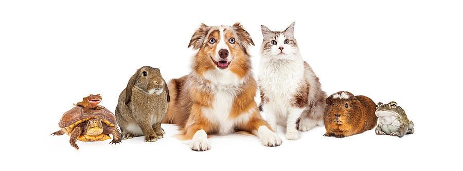 Animal Photograph - Domestic Pet Composite by Susan Schmitz