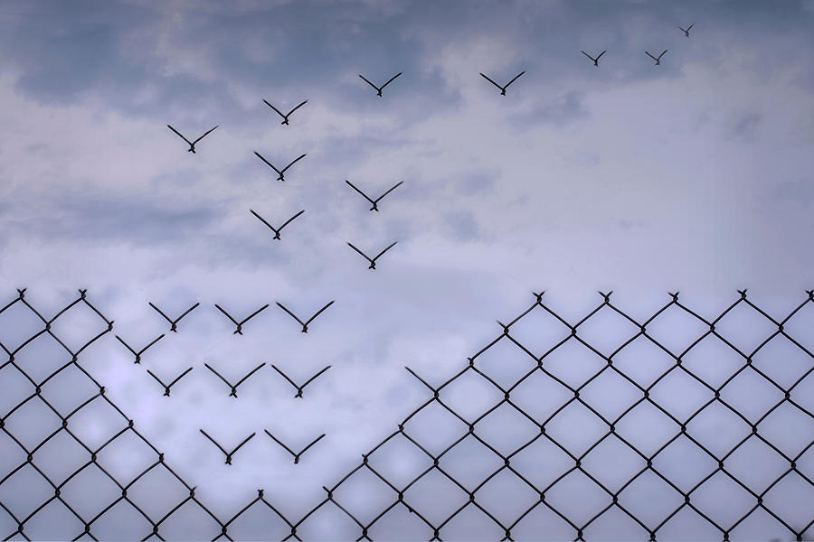 Fence Photograph - Dona??t Fence Me In! by Bjorn Emanuelson