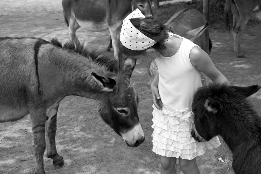 Donkeys Photograph - Donkey Whisperer by Brooke T Ryan