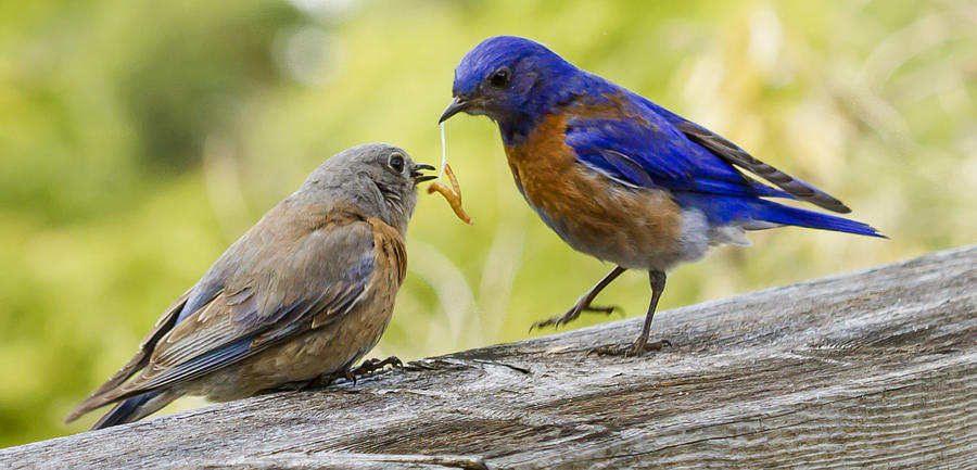 Animals Photograph - Dont Drop It by Jean Noren