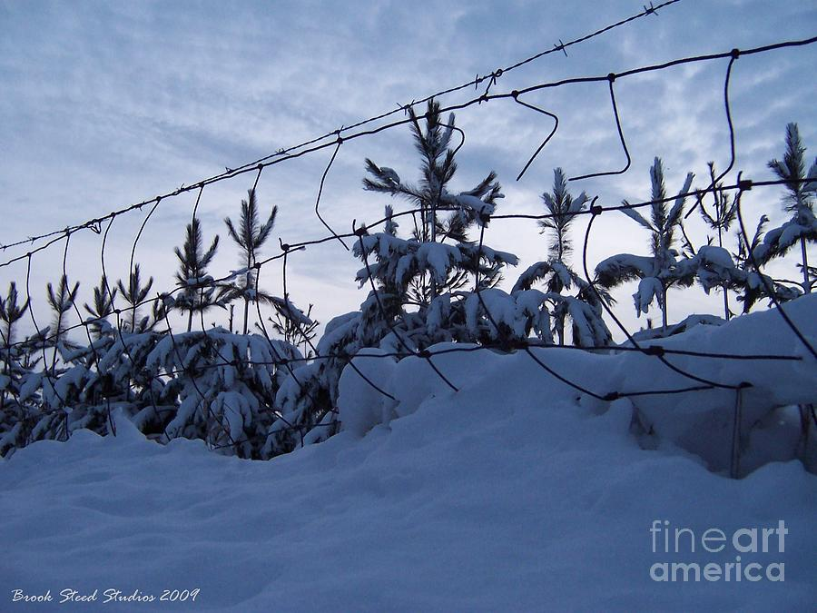 Winter Photograph - Dont Fence Me In by Brook Steed