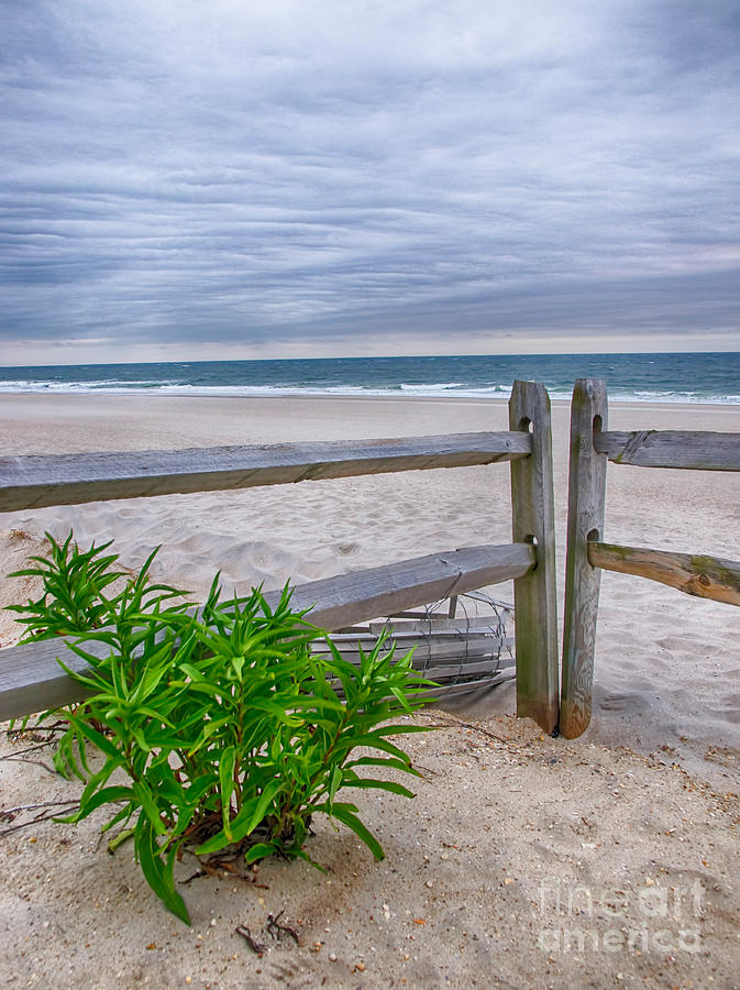 Fence Photograph - Dont Fence Me In by Mark Miller