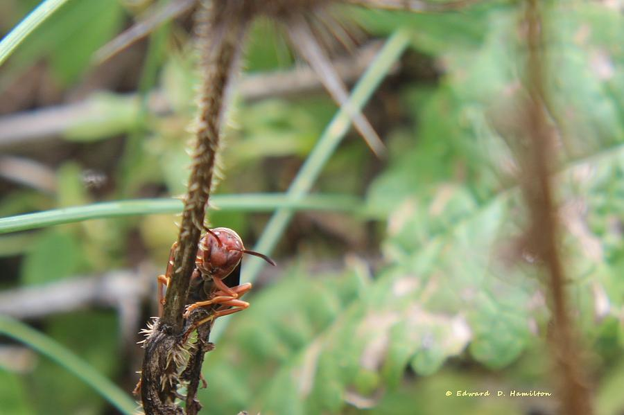 Wasp Photograph - Dont Get Any Closer. by Edward Hamilton