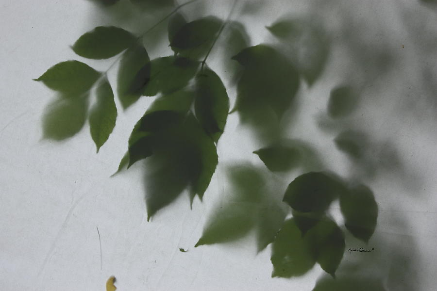 Leaves Photograph - Dont Leaf Me by Heather Gallup