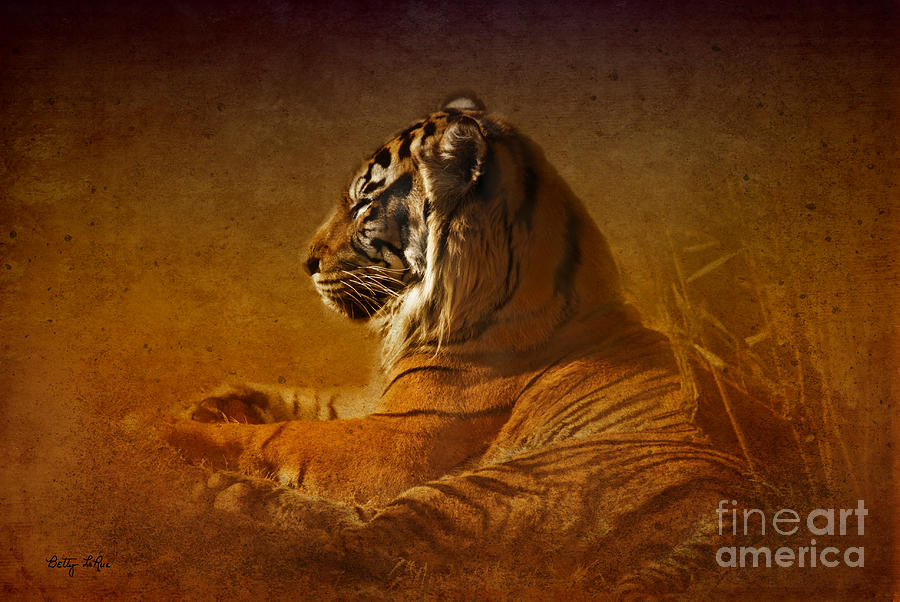 Tiger Photograph - Dont Wake A Sleeping Tiger by Betty LaRue