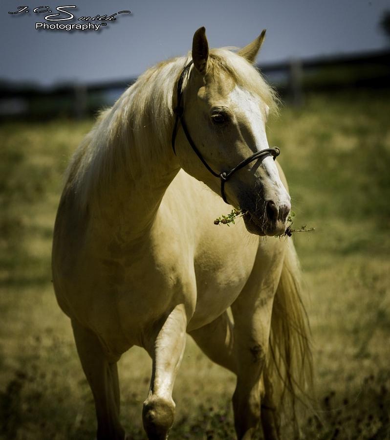 Horses Photograph - Doolie 2 by Jason Smith