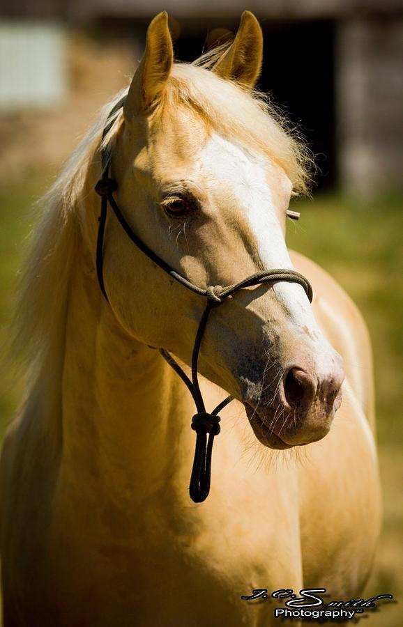 Horses Photograph - Doolie by Jason Smith