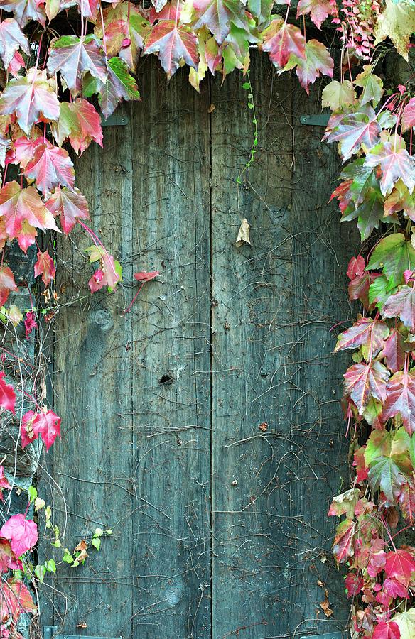 Door To Secret Garden Photograph by Sharon Lapkin