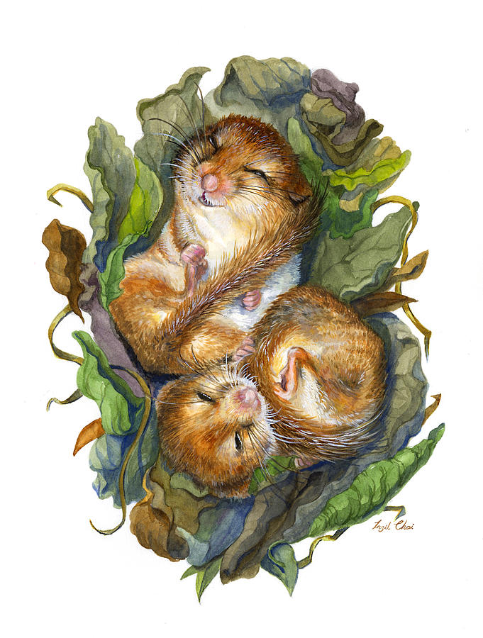 Mouse Painting - Dormouse Hibernation by Insil Choi