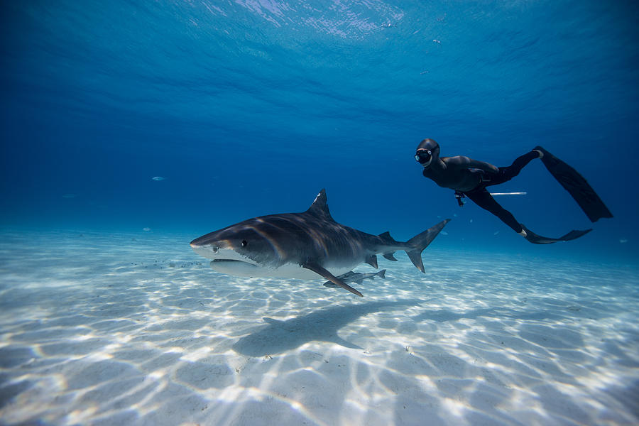 Freediving Photograph - Dos Amigas by One ocean One breath