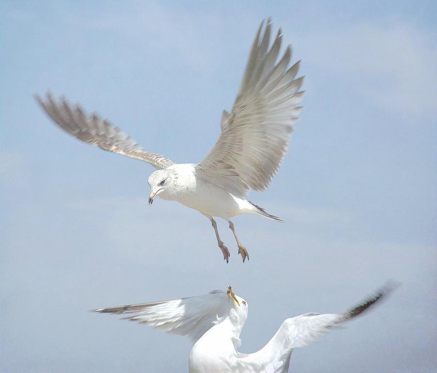 Seagulls Photograph - Double Decker 4 by Fraida Gutovich