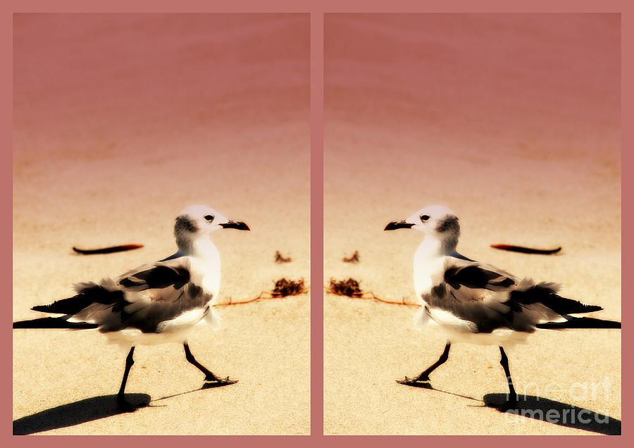 Double Gulls Photograph - Double Gulls Collage by Susanne Van Hulst