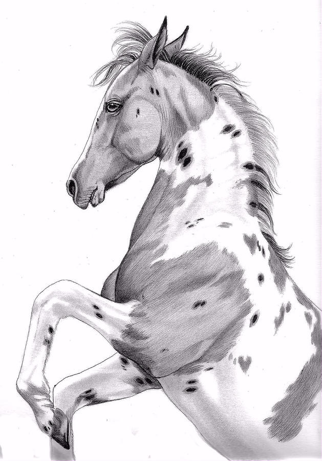 Saddlebred Horse Head Drawing Drawing - Double Hearts Dandy by Cheryl Poland