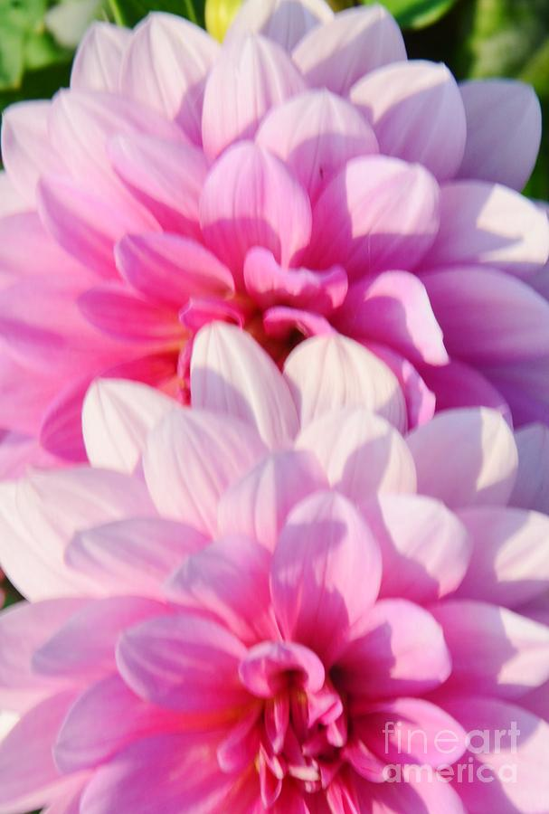 Pink Photograph - Double Pink by Kathleen Struckle