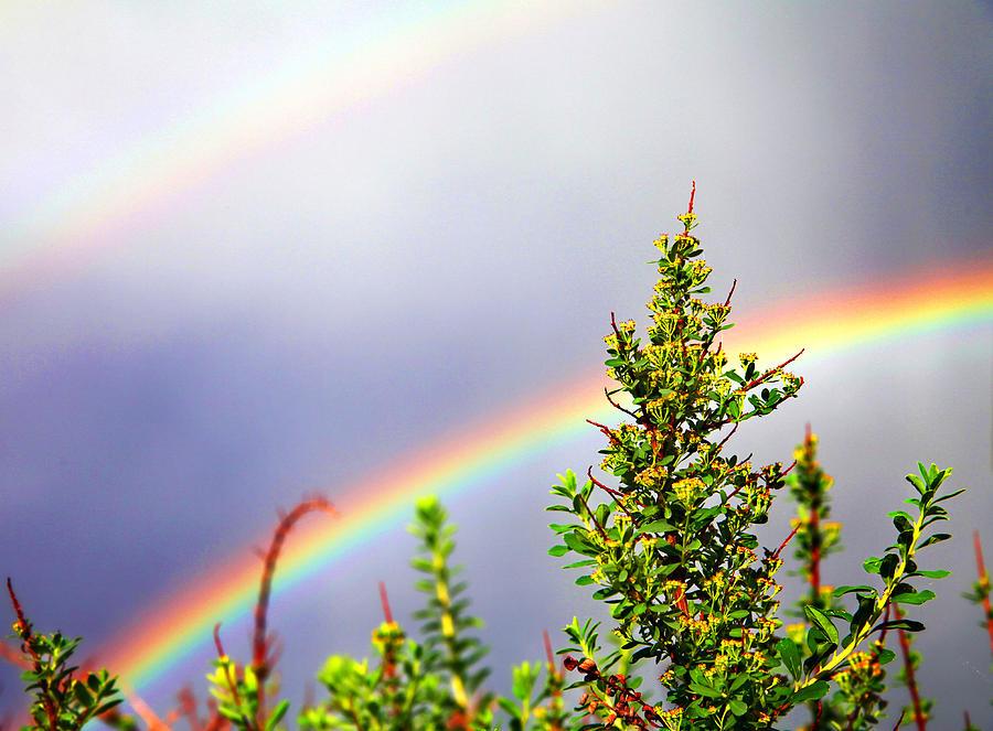 Rain Photograph - Double Rainbow Sky by Destiny  Storm