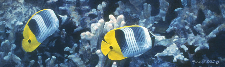 Reef Fish Painting - Double Saddleback Butterflyfish by Randall Scott