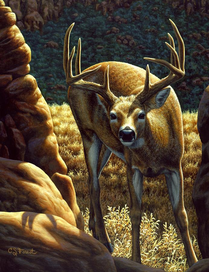 Buck Painting - Whitetail Buck - Double Take by Crista Forest