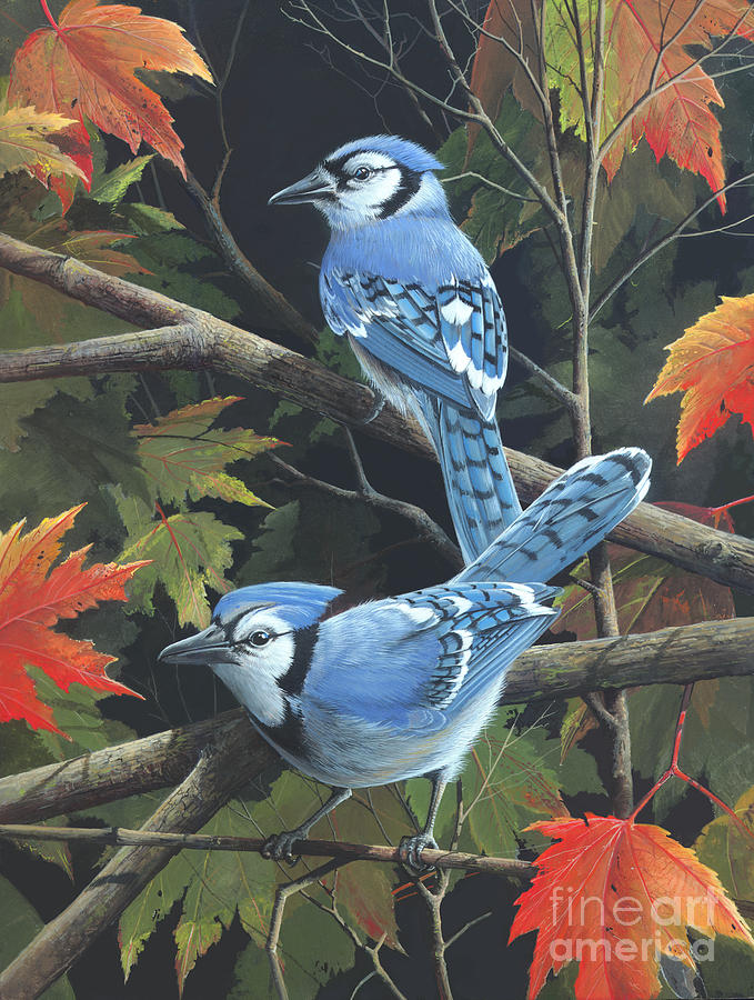 Jay Birds Painting - Double Trouble by Mike Brown