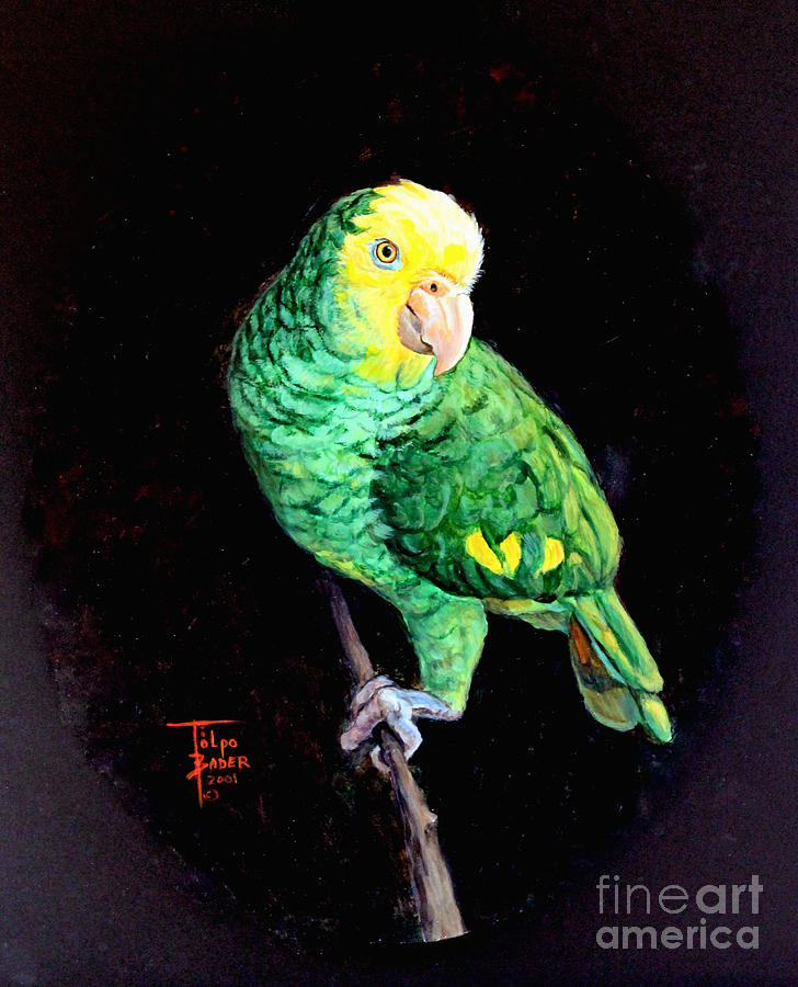 Double Yellow Headed Amazon Paco by Art By - Ti   Tolpo Bader