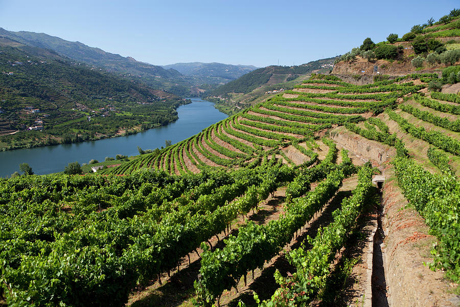 Douro Valley Photograph by Luisportugal
