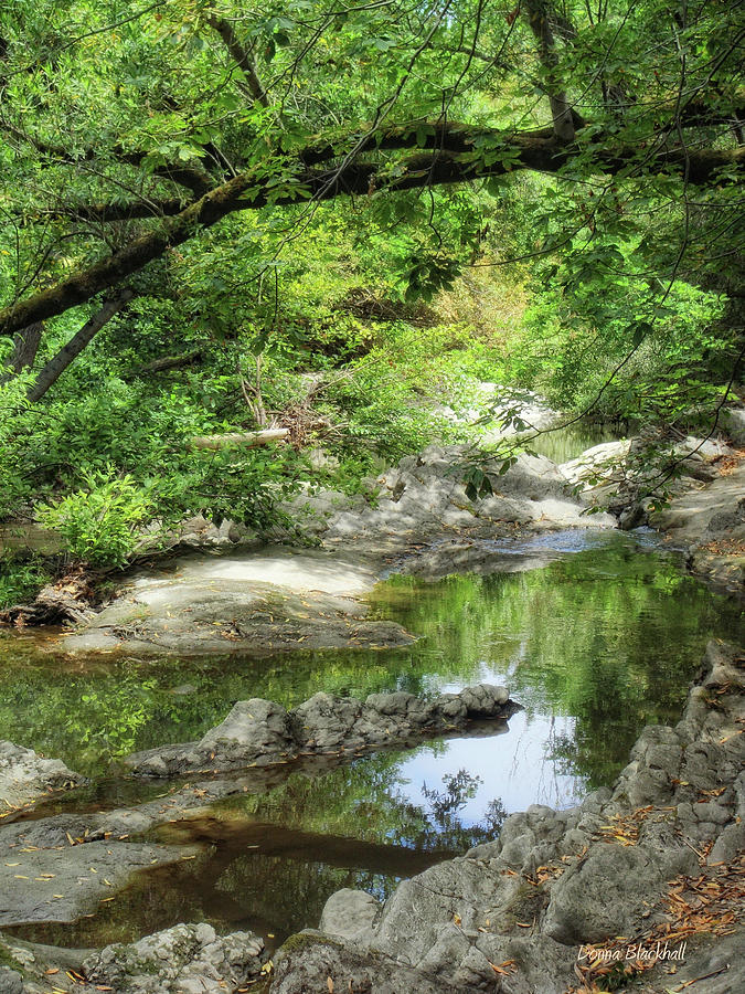 Creek Photograph - Down By The Creek by Donna Blackhall