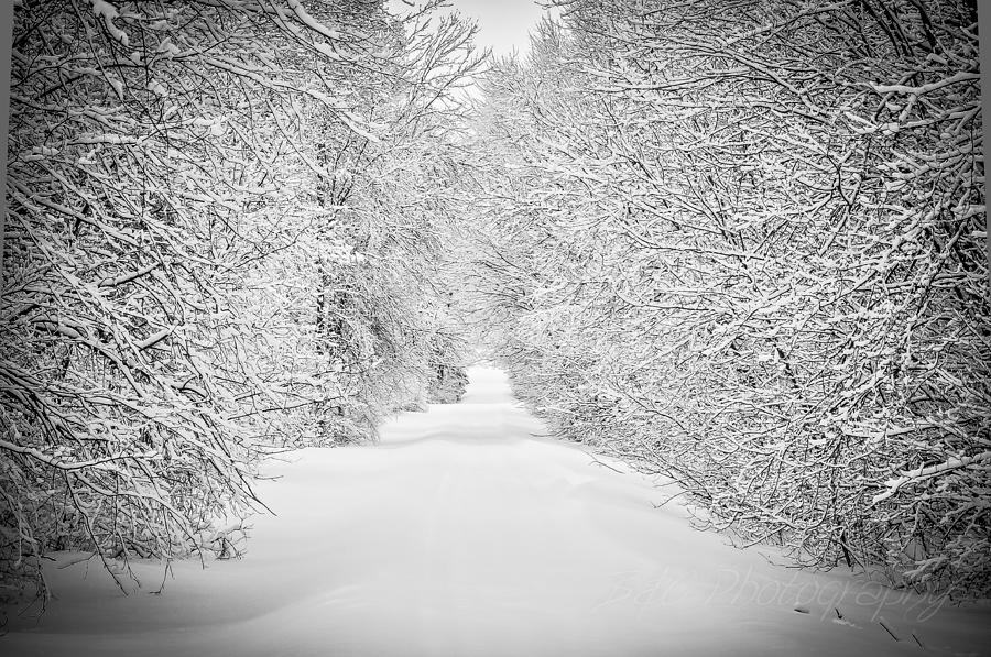 Winter Photograph - Down The Lane by BandC  Photography