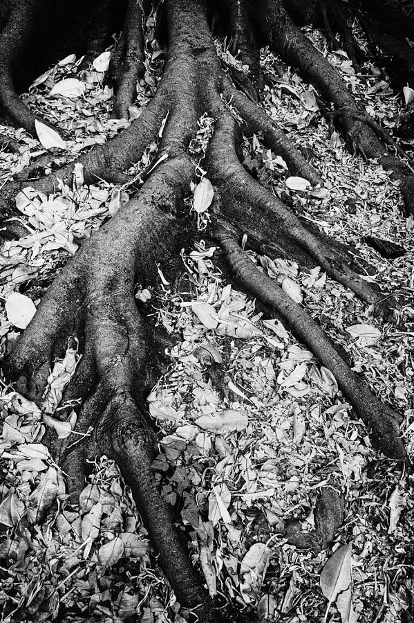 strong roots by Darko Ivancevic