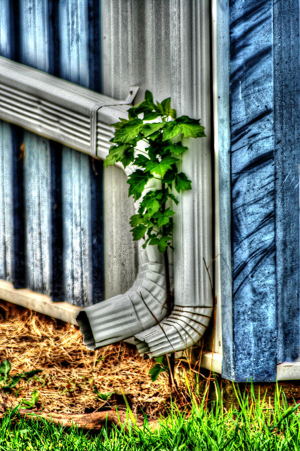 Garden Photograph - Downspout by Doc Braham
