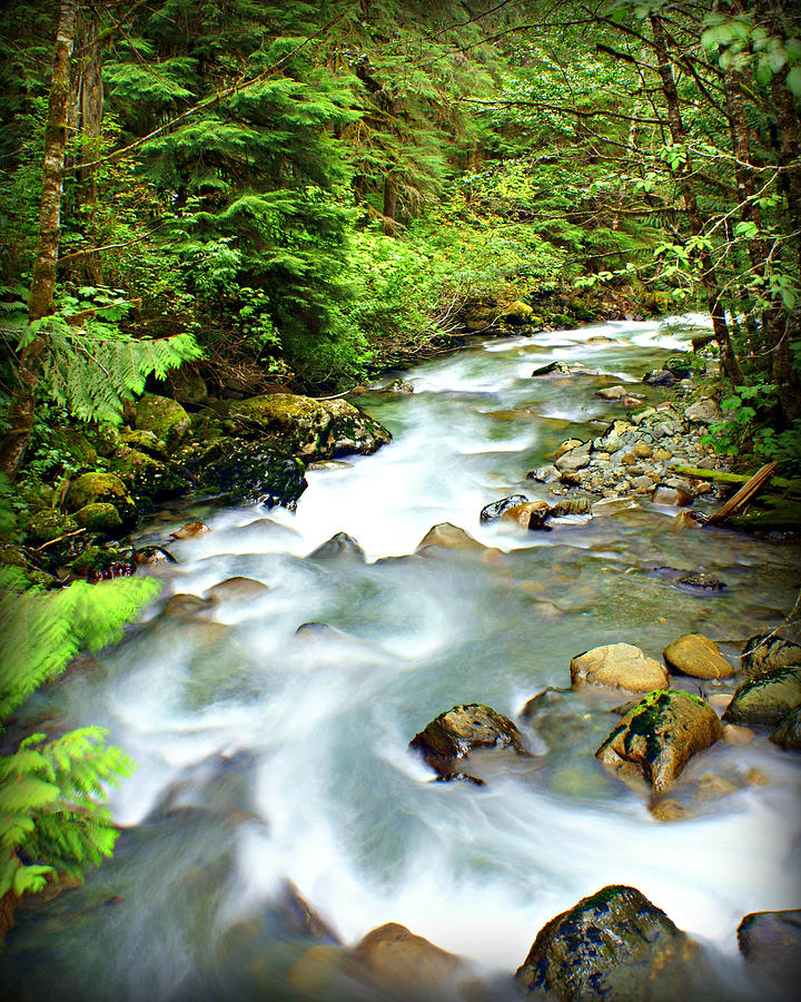 Stream Photograph - Downstram In The Olympics by Marty Koch