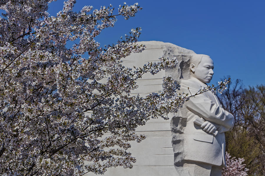Cherry Blossom Festival Photograph - Dr Martin Luther King Jr Memorial by Susan Candelario