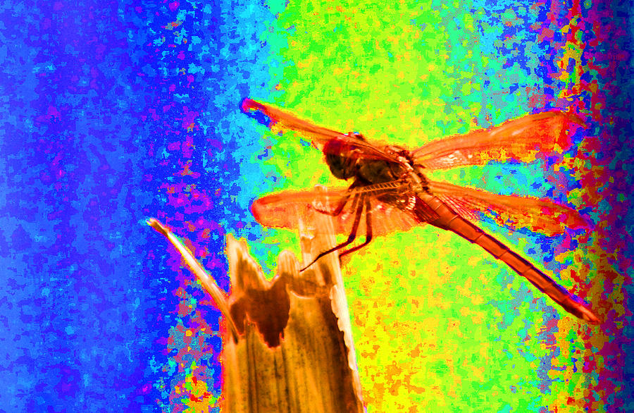 Dragon Fly Photograph - Dragon Fly- Creative by Miguel Hernandez