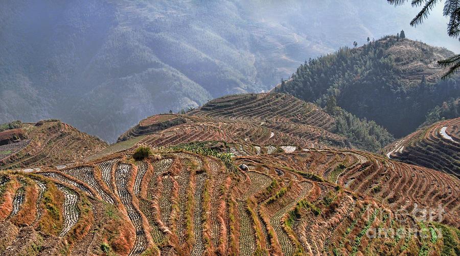 China Photograph - Dragon S Backbone Rice Terraces by Alexandra Jordankova