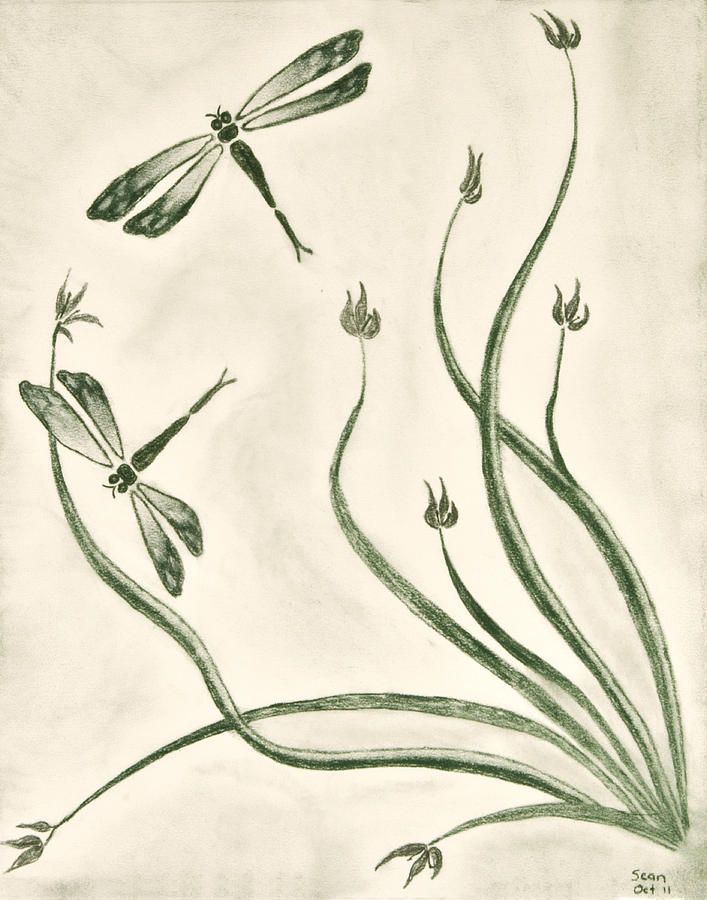 Dragonflies Drawing - Dragonflies by Sean Mitchell
