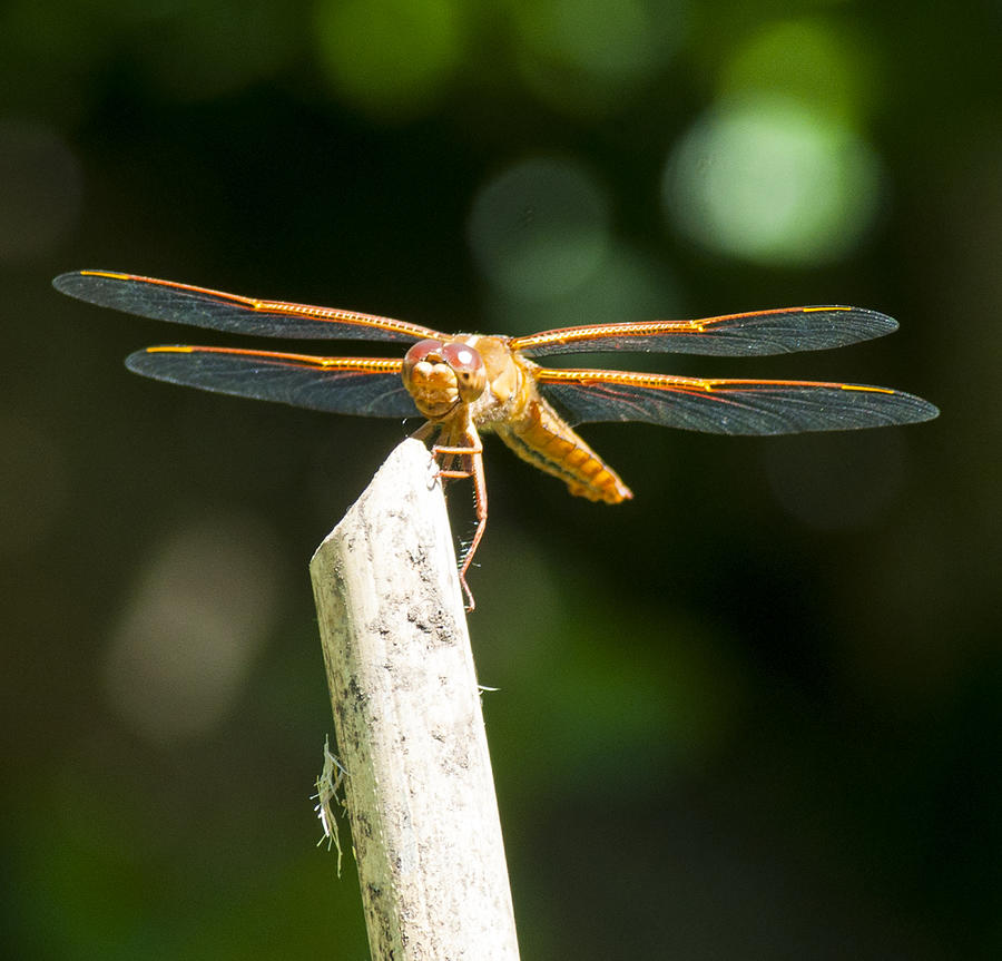 Dragonfly Photograph - Dragonfly 2 by Scott Gould
