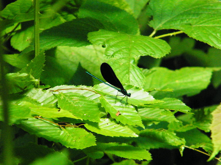 Dragonfly Photograph - Dragonfly by Brittany Gandee