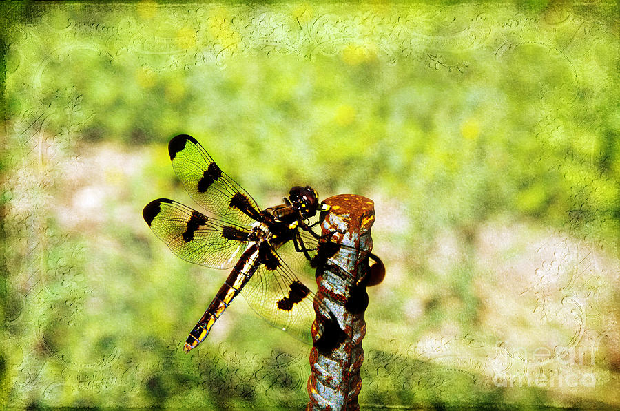 Dragonfly Photograph - Dragonfly Eating Breakfast by Andee Design