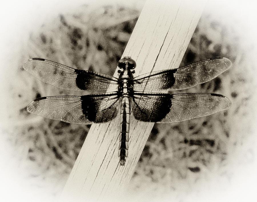 Dragonfly Digital Art - Dragonfly In Sepia by Tony Grider